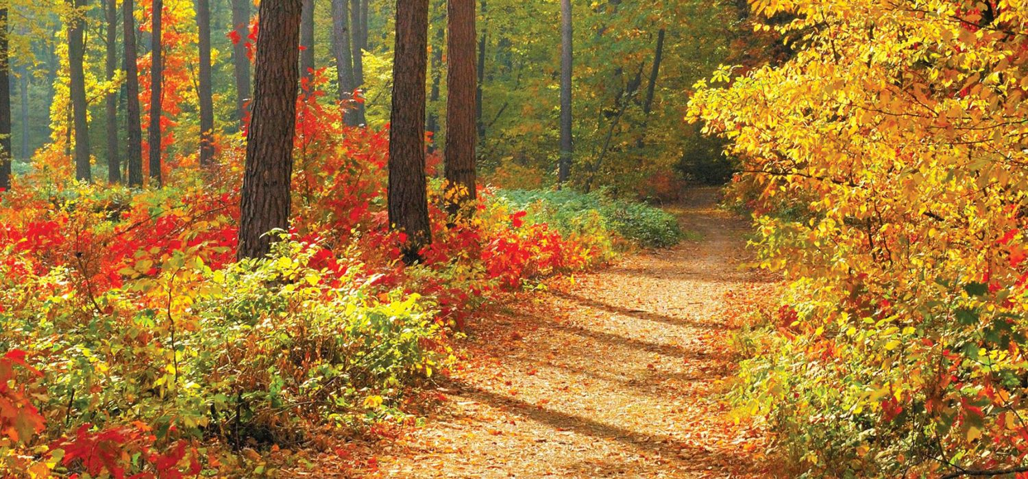 Healing and forging a new path in life